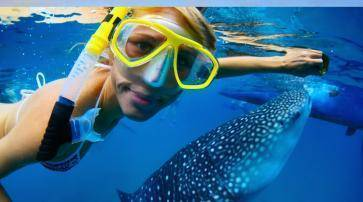 1468893241098_snorkeling_with_whale_sharks_baja.jpg