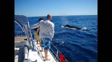 1468893241464_whale_encounter.jpg