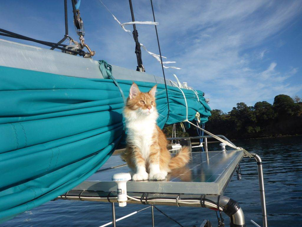 Skatty-Boat-Cat-on-Solar-Panels-1024x768